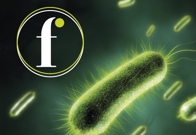 Fleming Network bacteria image